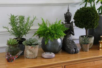 Houseplants to purify the air