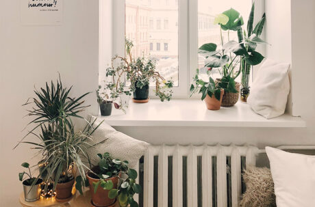 Green houseplants in white room detoxify the air