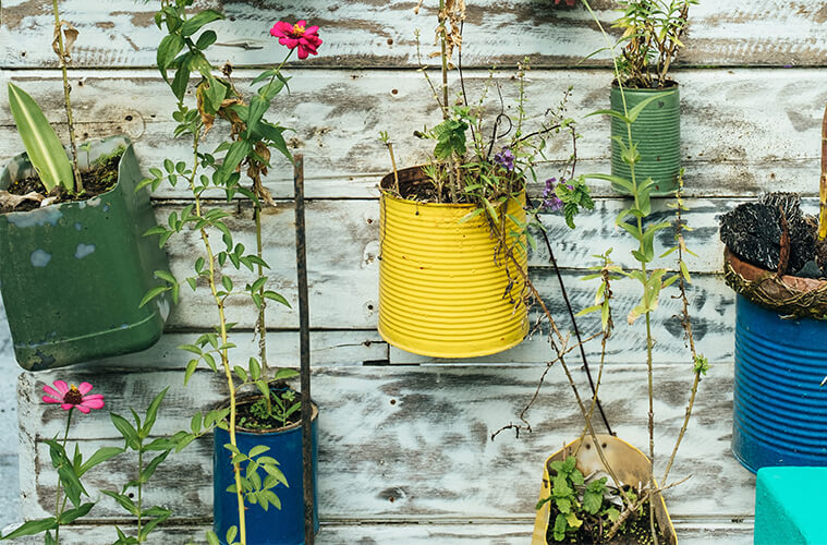 Repurposed tin cans used as decorative vases in garden