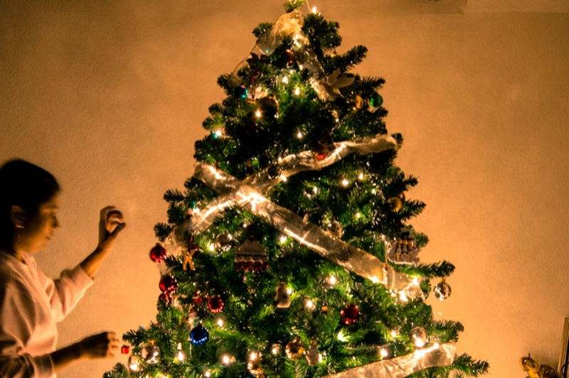 /images/pages/650-1 Christmas Trees.jpg