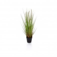 Dogtail Grass in Pot 52cm