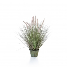 Dogtail Grass in Metal Pot