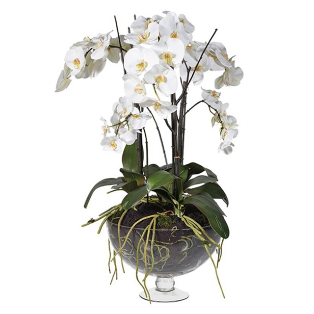 White Phalaenopsis Orchids In White Glass Footed Bowl
