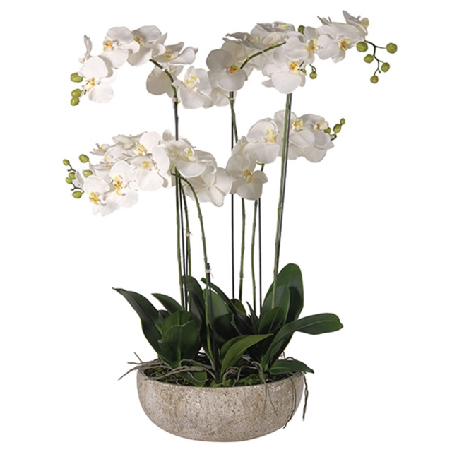 White Phalaenopsis Orchids In Stone-Look Bowl