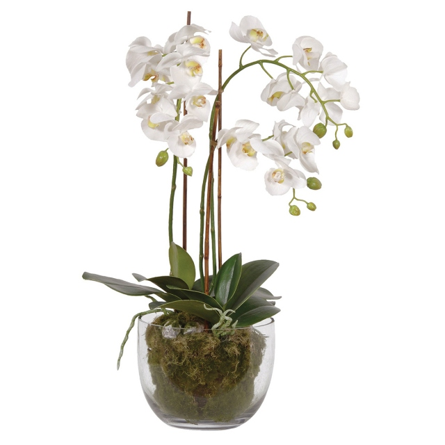 Phalaenopsis Orchid in Planter - White