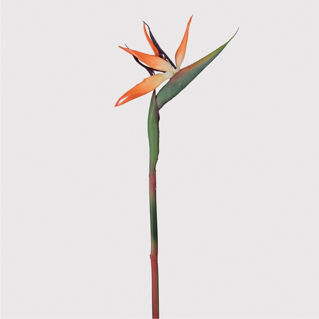 Bird Of Paradise Stem - Orange