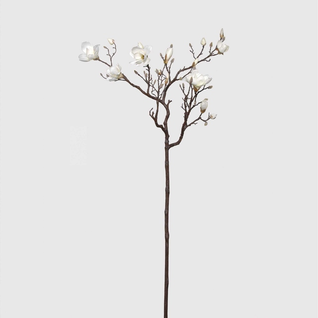 Magnolia Tree Branch - White