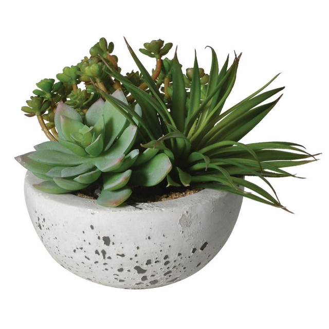 Succulent Arrangement with Grey Cement Bowl