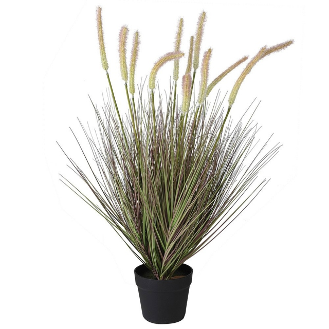 Onion Grass with Cat Tail in Pot