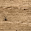 Natural Textured Oak
